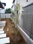 20091122植樹1