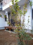 20091122植樹2