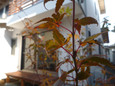 紅葉2009