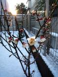 20100202積雪3